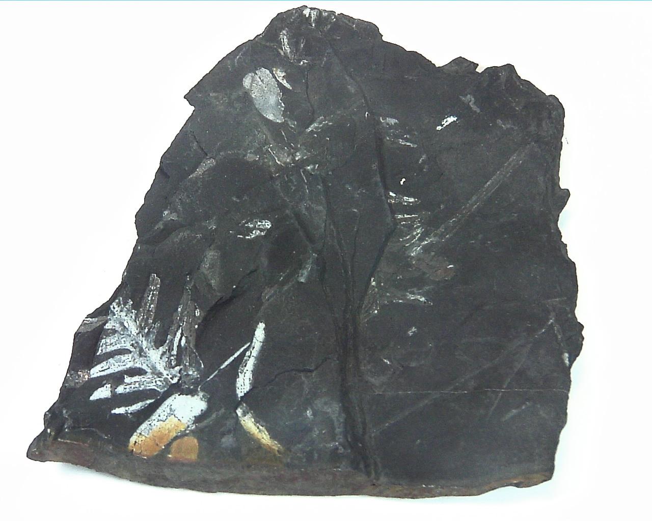 Coal Specimen From Pennsylvania MS,792 9